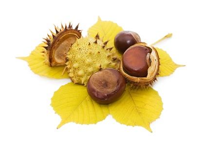 castaÑas: Closeup marrón castaño nuez aislado en blanco