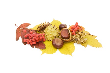 Brown chestnut nut closeup isolated on white photo