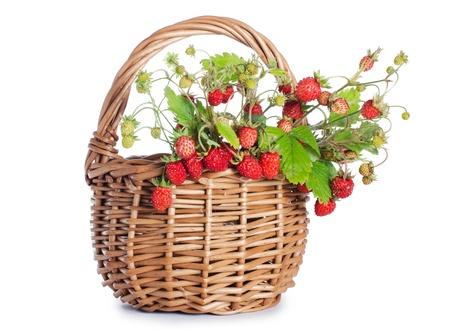 Fresh wild strawberry isolated on white background photo