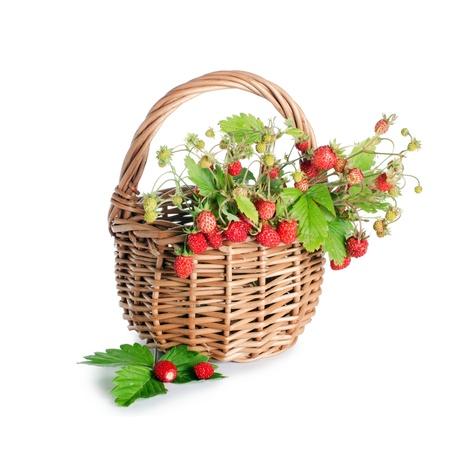 strawberry plant: Fresh wild strawberry isolated on white background