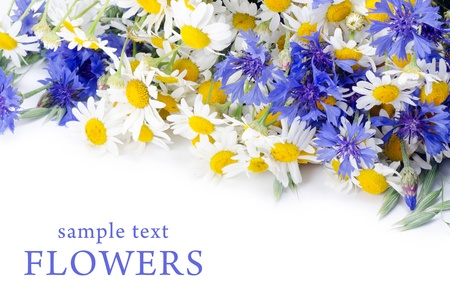 The beautiful blue cornflower as a background Stock Photo - 10655414