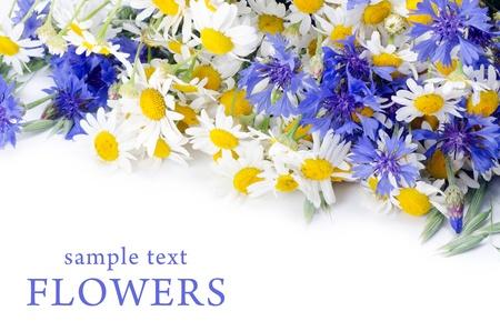 garden cornflowers: The beautiful blue cornflower as a background Stock Photo