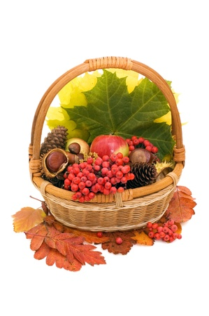 Autumn leaves and fruits isolated on white photo
