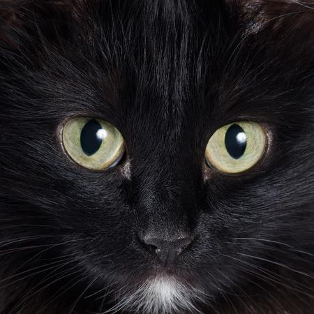 black head and moustache: Close up portrait of a black kitten