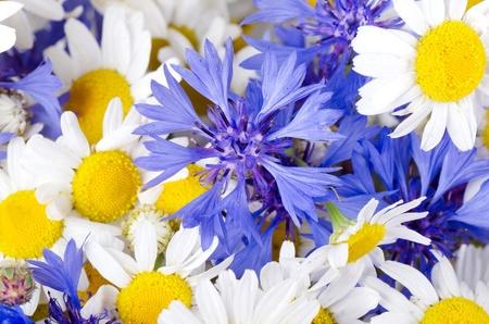centaurea: The beautiful blue cornflower as a background Stock Photo