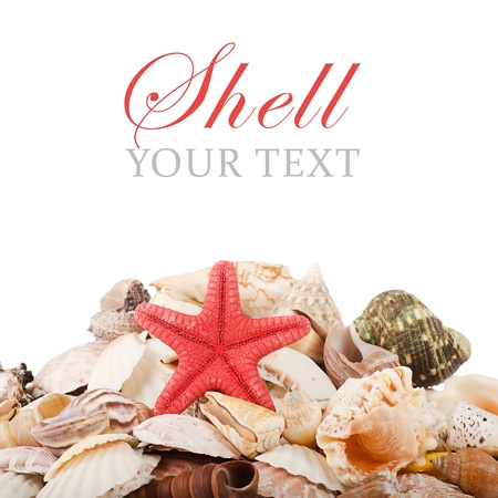 Sea shell isolated on a white background photo