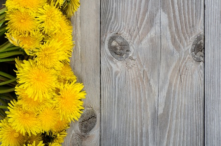 The yellow dandelion on a wooden surface photo
