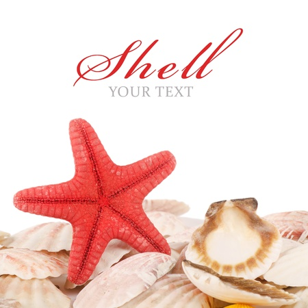 Sea shell isolated on a white background Stock Photo - 11708508