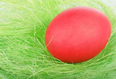 The colorful Easter Eggs on green Grass photo