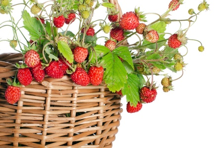 Fresh wild strawberry isolated on white background photo