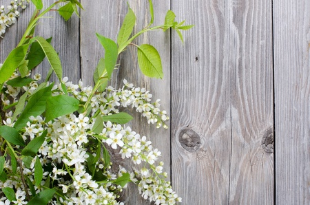Bird cherry branch on a wooden surface photo