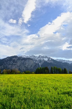 Alps flowers field on mountains background Stock Photo - 13633795