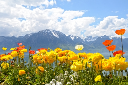 geneva: Flowers against mountains and lake Geneva from the Embankment in Montreux. Switzerland