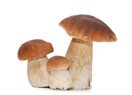 The boletus edulis isolated on white background photo
