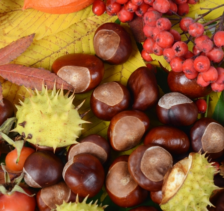 Chestnuts on autumn leaves as a background Stock Photo - 15736305