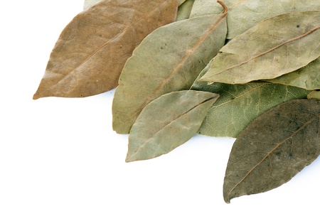dried leaf: Dry laurel leaf isolated on white background Stock Photo