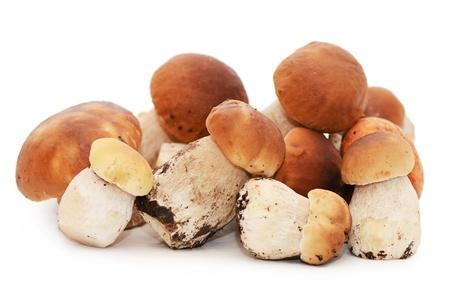 boletus mushroom: The boletus edulis isolated on white background