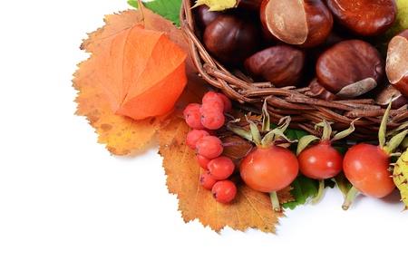 Autumn still-life - chestnuts and mountain ash photo
