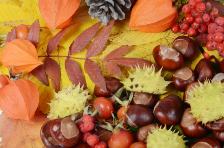 Chestnuts on autumn leaves as a background photo