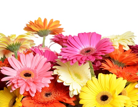 The bouquet gerbera flower as a background photo