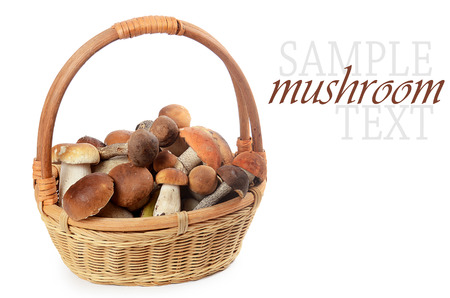 The raw boletus edulis in a basket photo