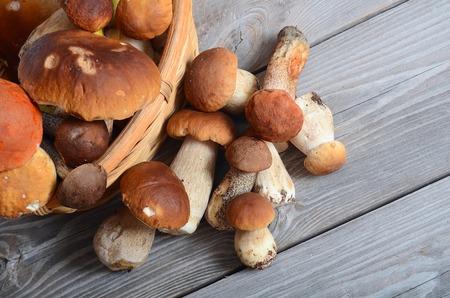 boletus mushroom: The raw boletus edulis as a background