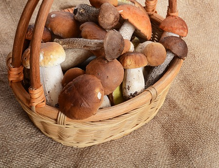 cepe: The raw boletus edulis as a background
