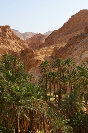 date palm tree: Famous Mountain oasis Chebika in Tunisia, Northern Africa