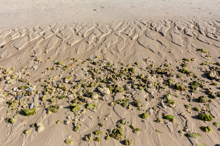 Corals and sandy beaches after low tide on the island of Coral. On the fur there are furrows from the water.