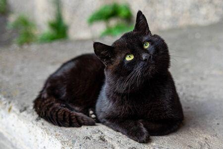 big black cat with green eyes lies on the asphalt