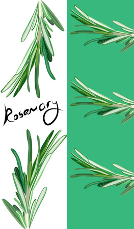 useful: rosemary booklet. Useful green herbs. delicious seasoning. tasty flavoring for food. Vector illustration Illustration