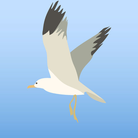 wingspan: Seagull in the sky. Illustration, elements for design. Illustration