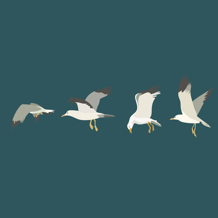 wingspan: Seagulls in the sky. Illustration, elements for design. Illustration