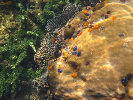 Coral Reef 2 Reklamní fotografie
