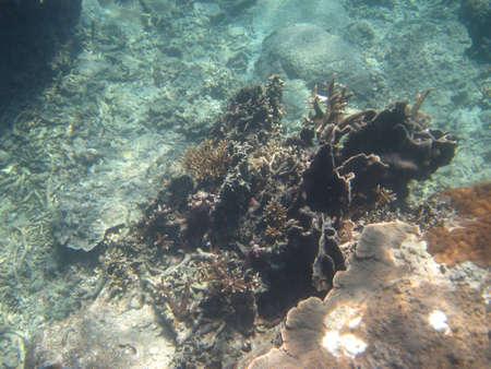 Coral Reef 4 Reklamní fotografie