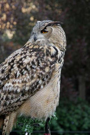 Owl Imagens