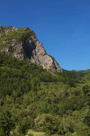 forested: Forested Mountain