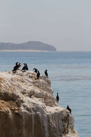 A flock of birds sits on the rocks by the coast Imagens