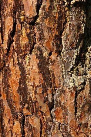 cortex: cortex texture Stock Photo
