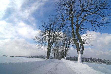 specific: winter alley tree Stock Photo