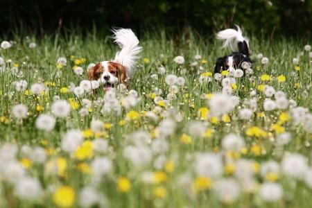 perro corriendo: perros de ejecuci�n Foto de archivo