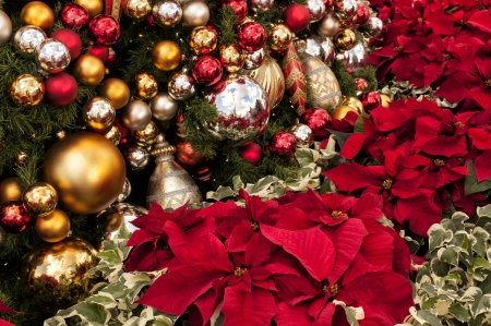 Poinsettia plants and Christmas Tree with dozens of ornaments photo