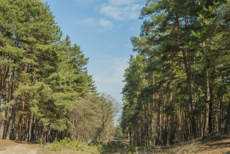 spring forest Фото со стока