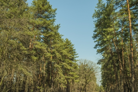 spring forest Фото со стока - 18655955