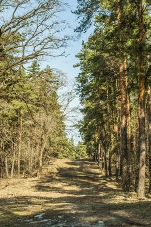 spring forest Фото со стока - 18655961