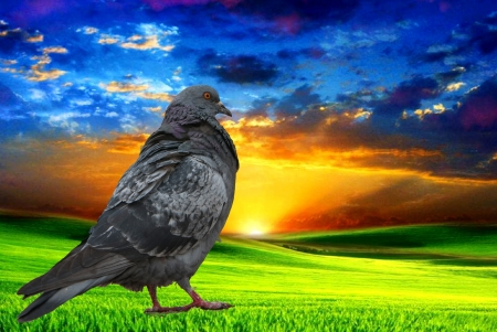 imposition: sunset of a sun with imposition of semilucent layer of image of bird pigeon