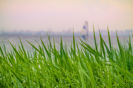 Green grass with blurried unfocused windserfer sailing away on sunset. Vacation conception