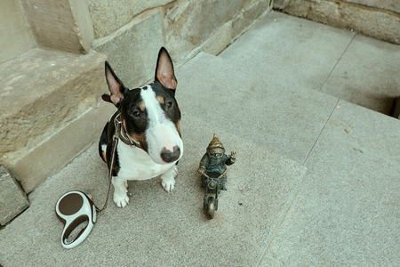 Dwarf gnome small statue, gnome biker on motorcycle, bronze statue with a puppy dog miniature bull terrier staring at you. Wroclaw, Poland