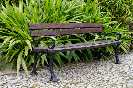 Awesome vintage bench in Botanical garden in Europe in summer