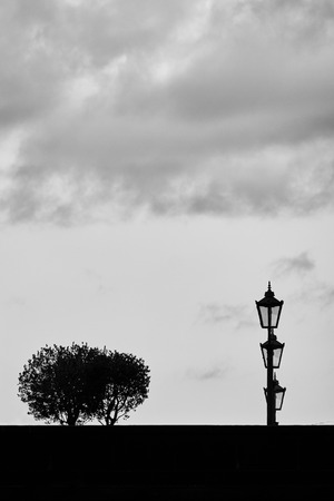 Trees and lanterns in Dresden, Germany. Minimalism monochrome concept.